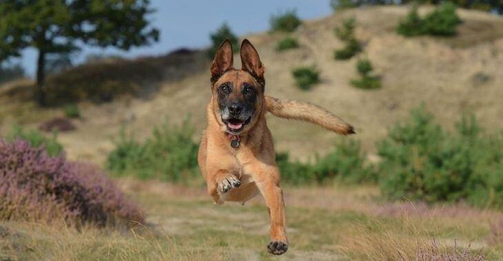 Montélimar : un chien tué d'un coup de couteau