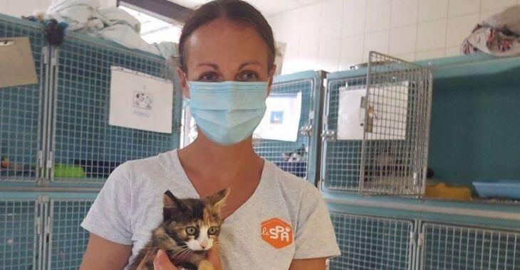 Rennes : la SPA reçoit trop de chatons