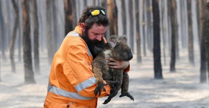 Australie : 3 milliards d'animaux tués ou déplacés dans les incendies