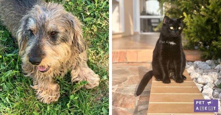 Chiens et chats disparus : les 4 plus belles retrouvailles du mois de juillet 2020