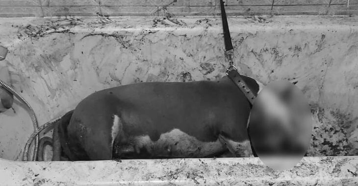 Essonne : un chienne poignardée