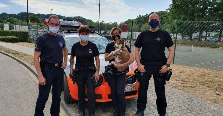 Belgique : un chien enfermé dans une voiture sauvé