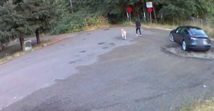 Filmée en train d'abandonner son chien