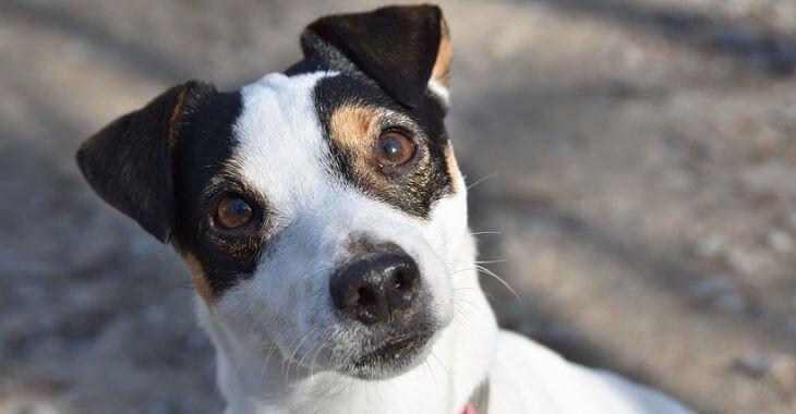 Drôme : un chien permet de retrouver son maître décédé