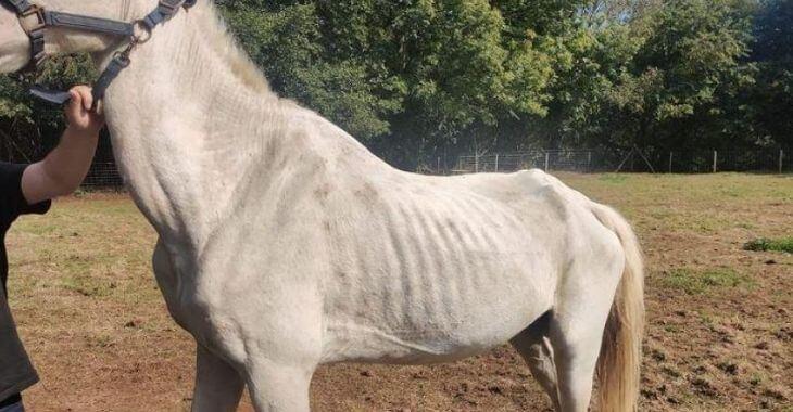 Belgique : 4 chevaux maltraités sauvés