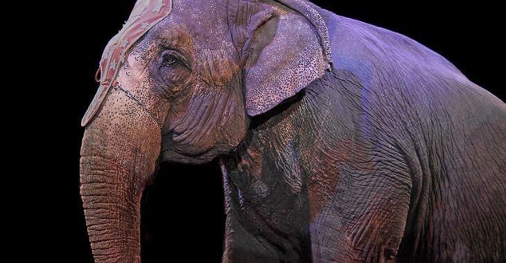 Bien-être animal : le gouvernement critiqué