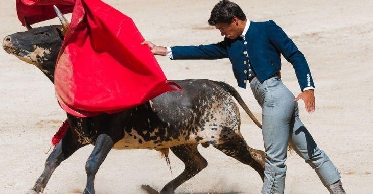 Gard : interdiction des aides pour les élevages de taureaux