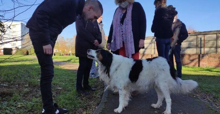 Douai : mobilisation pour le chien Lucky
