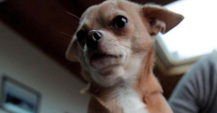 Yvelines : 33 chiens sauvés d'un élevage clandestin
