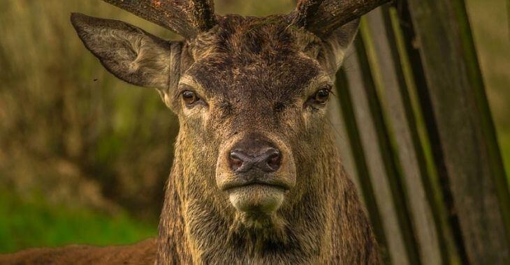 One Voice attaque les arrêtés autorisant la chasse