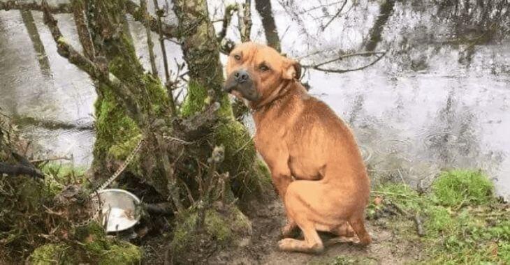 Vendée : un chien abandonné attaché à un arbre