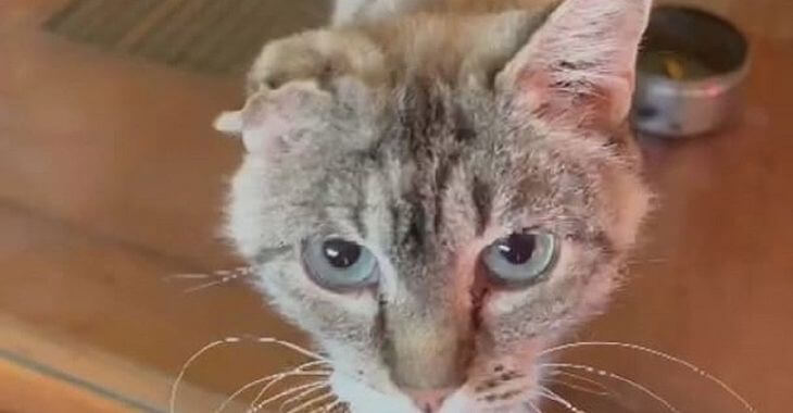 Gironde : 41 chats sauvés