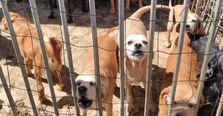 Indre : une quarantaine de chiens en danger