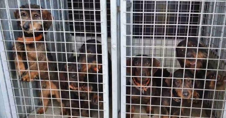 Ain : des chiens sauvés par les gendarmes