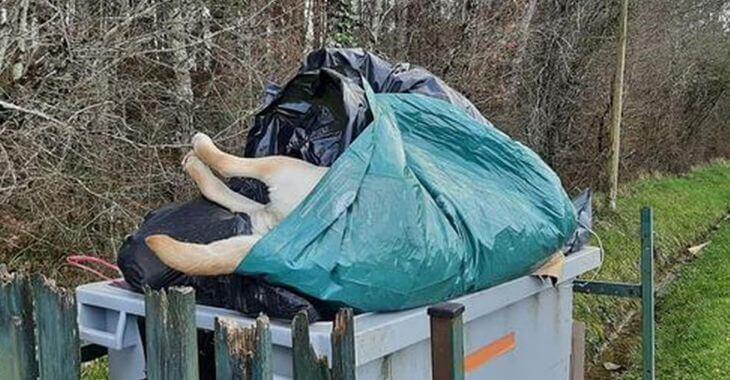 Lot-et-Garonne : le corps d'un chien jeté dans une poubelle