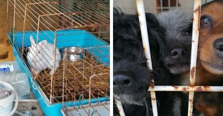 Gironde : une trentaine d'animaux sauvés