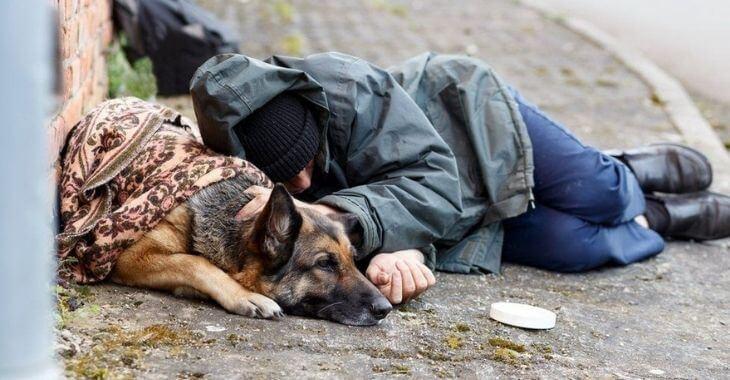 Rennes : création d'une pension pour chien de sans-abri