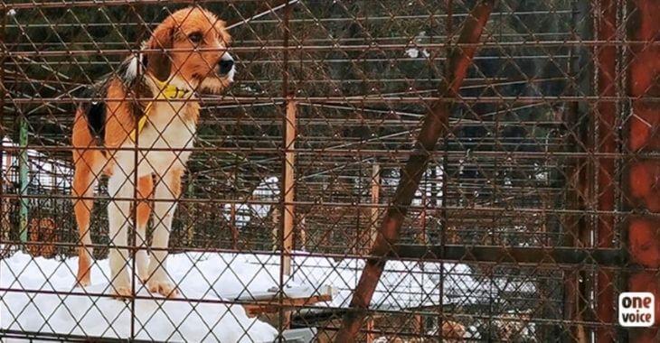 Jura : des chiens en grand danger