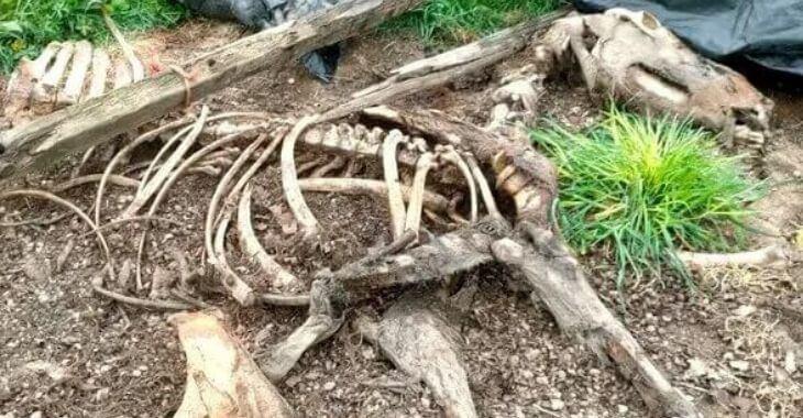 Loire-Atlantique : des cadavres de chiens et de chevaux retrouvés