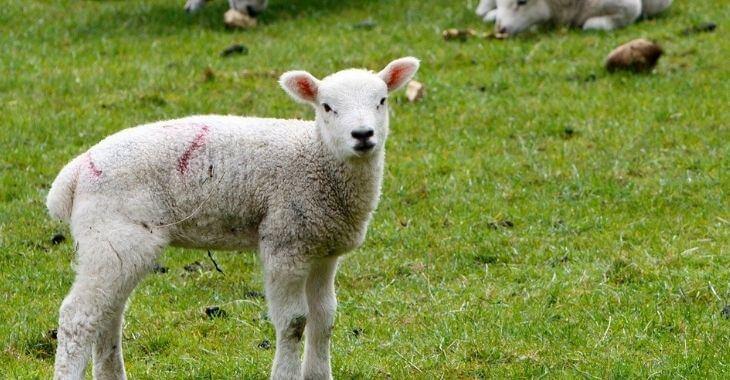 Aveyron : des cadavres d'animaux abandonnés dans la nature