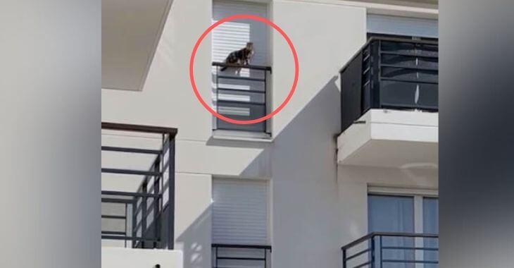 Orly : un chat enfermé sur un rebord de fenêtre
