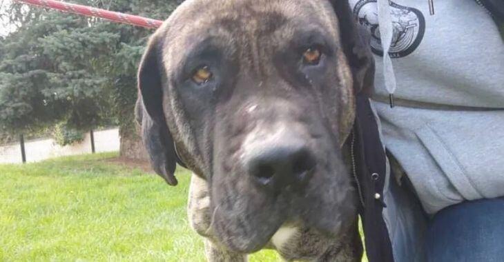 Villepinte : trois chiens sauvés