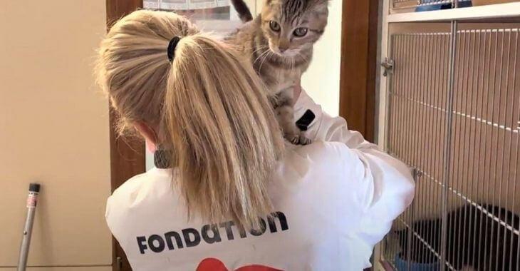 Savoie : 110 chats sauvés