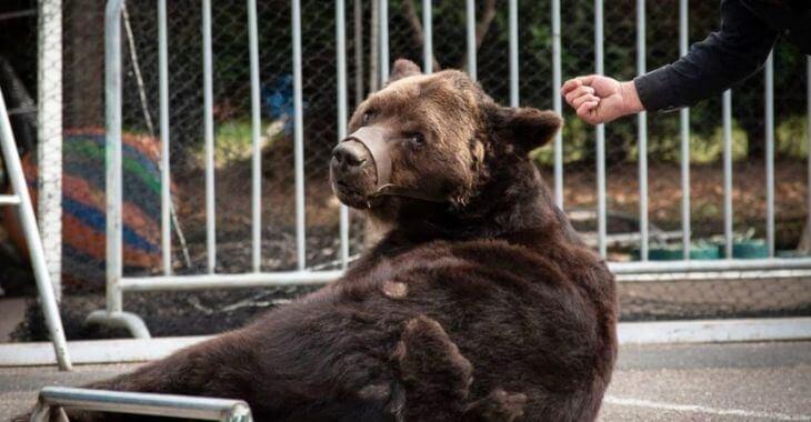 Blois : un dresseur d'ours condamné