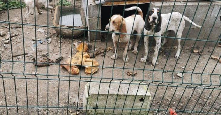 Tarn : des chiens de chasse maltraités