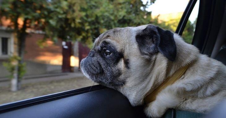 Charente-Maritime : des chiens enfermés dans une voiture