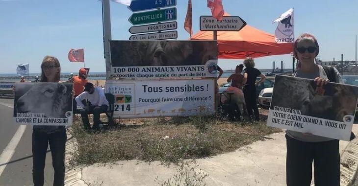 Sète : manifestation contre le transport d'animaux