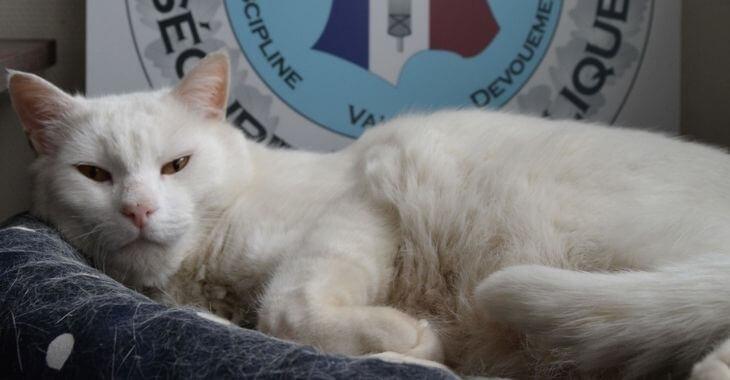 Côtes-d'Armor : un chat au commissariat de Lannion