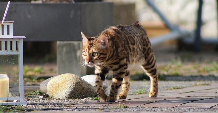 Un chat volé retrouvé grâce à Facebook