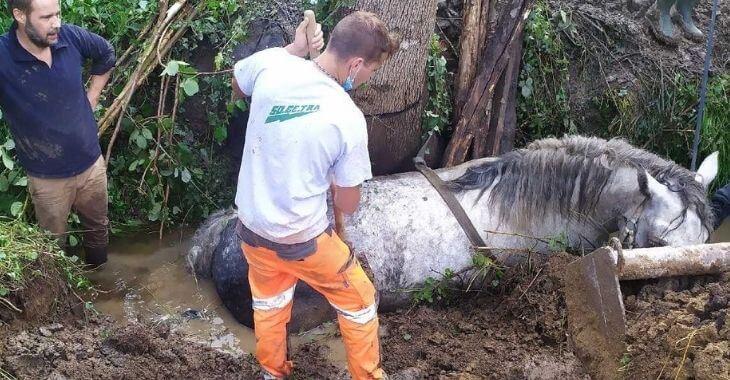 Orne : un cheval tombe dans un ruisseau