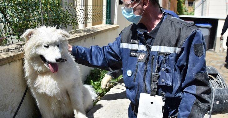 Argenteuil : sauvetage d'un chien