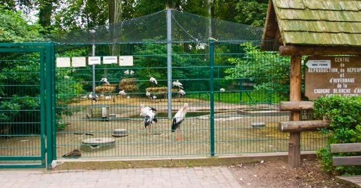 Strasbourg : tension au zoo de l'Orangerie