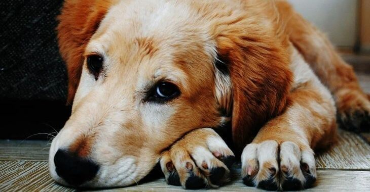 Valenciennes : un chien poignardé