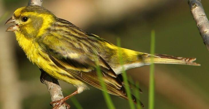 Montpellier : condamnés pour avoir capturé des oiseaux protégés