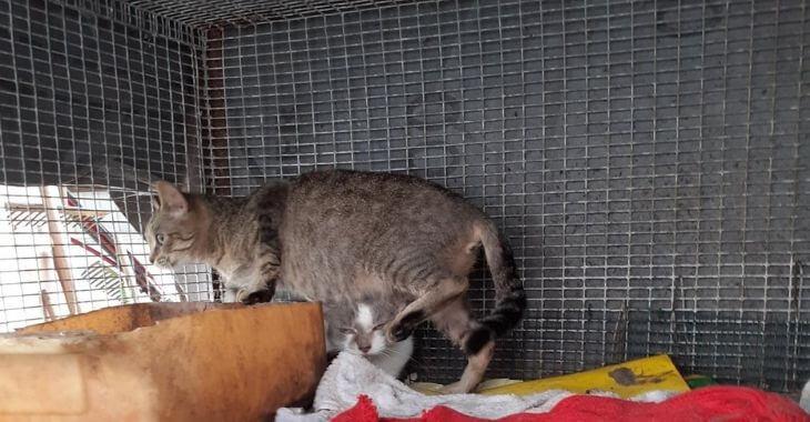 Meurthe-et-Moselle : plusieurs chats sauvés
