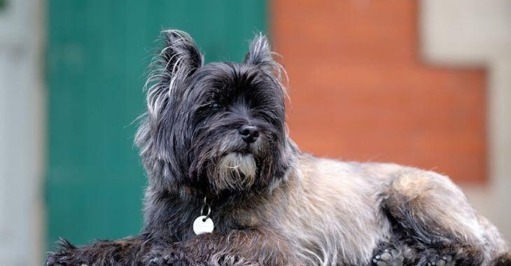 Calvados : un chien tué d'un coup de pied