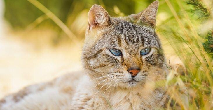 Bretagne : des chats tués par des chiens de chasse
