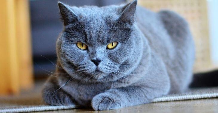 Yonne : un chat retrouvé après 12 ans